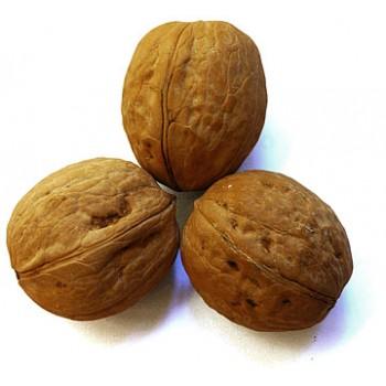Грецкий орех, в скорлупе, 1 сорт, 100 гр.